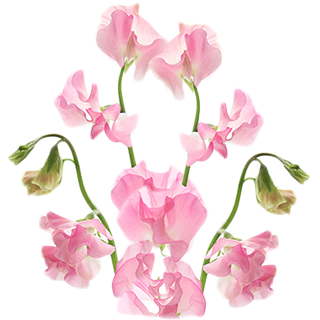 My Birthday Symbols For Sunday, April 15, 1962: birthstone ...